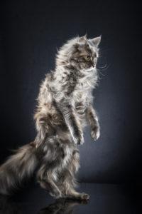 Alexis Reynaud STANDING CATS NEVA 01