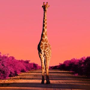 World Giraffe Day IG FB_veryhigh.width-9500x-prop