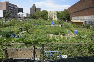 Urban farm plot in Coney Island, New York